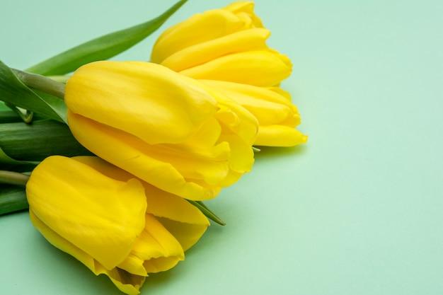 ミントの背景に黄色のチューリップの花。春を待っています。幸せなイースターカード。フラット横たわっていた、トップビュー。テキストのスペースをコピー