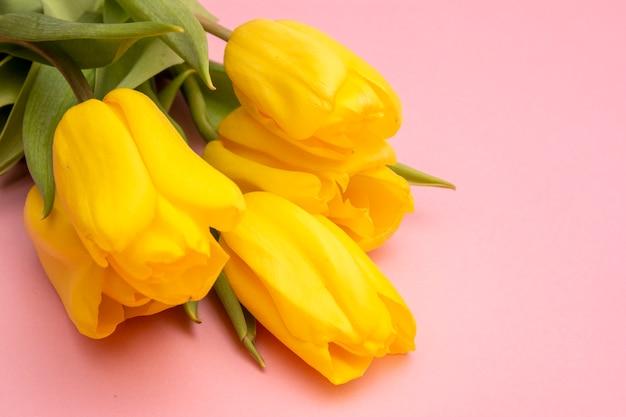Желтые тюльпаны цветы на розовом фоне. в ожидании весны. счастливой пасхи карта. плоская планировка, вид сверху. скопируйте место для текста