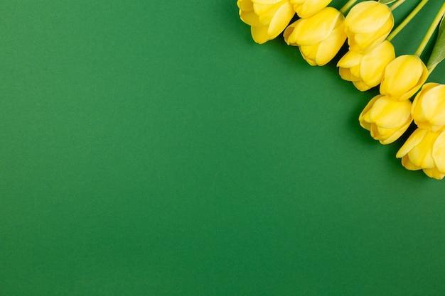 진한 녹색 표면에 노란 튤립 꽃