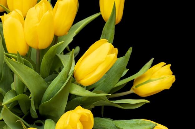 黒の背景に分離された黄色のチューリップ。美しい花。聖バレンタインデー。 3月8日。高品質の写真