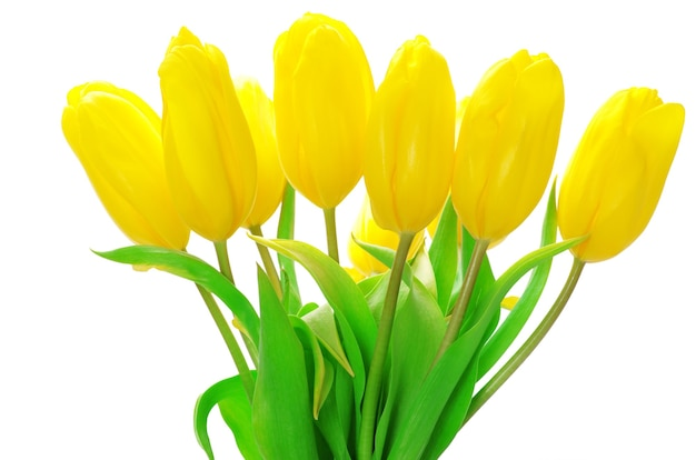 Желтые тюльпаны, изолированные на белом фоне