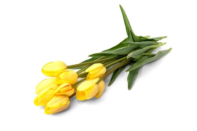 Желтые тюльпаны изолированы.