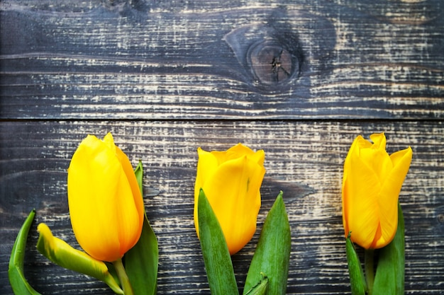 Yellow tulips lie on a black old vintage wooden table background.