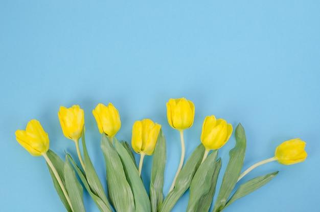 Желтые тюльпаны на синем фоне, с копией пространства