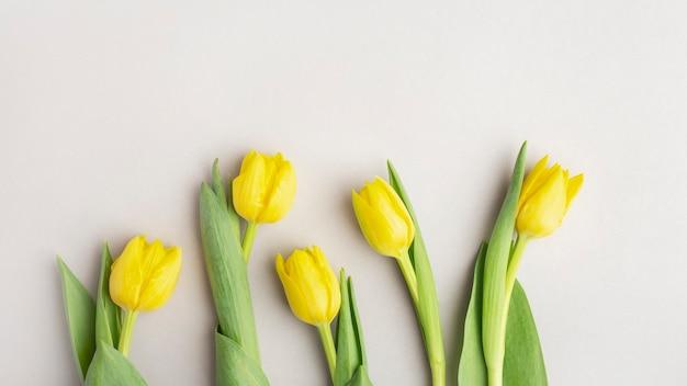 Желтые тюльпаны на сером фоне