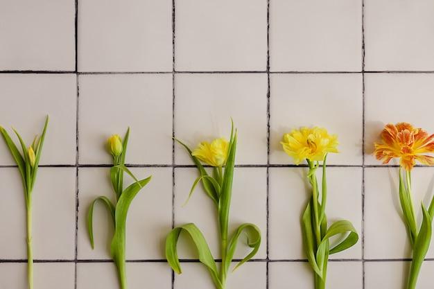 Желтые тюльпаны на разных стадиях роста на фоне бело-черной плитки