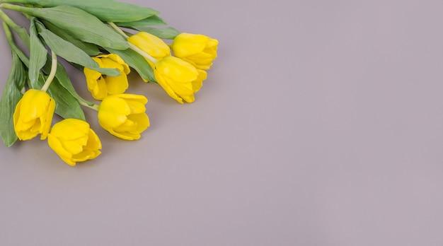 Желтые тюльпаны на сером фоне, с копией пространства
