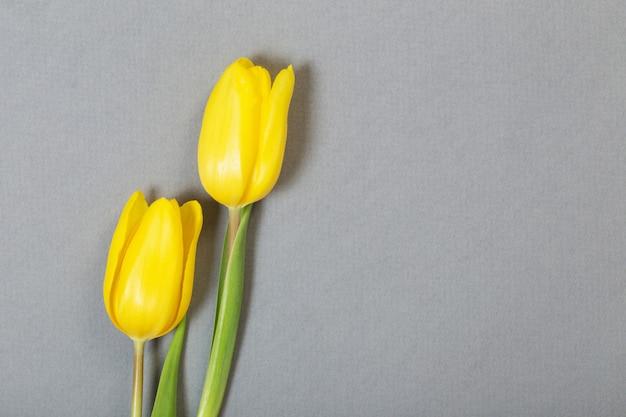 회색 표면에 노란 튤립
