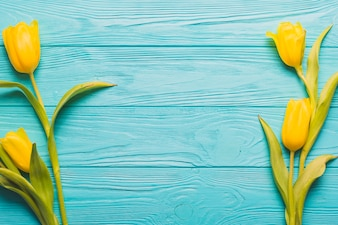 Yellow tulips on turquoise background