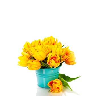 Желтые тюльпаны на белом фоне