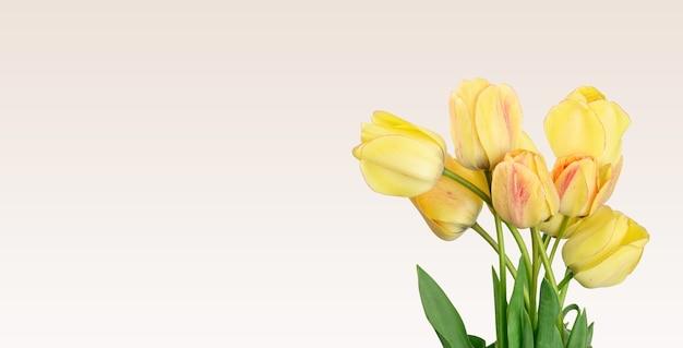 Желтые тюльпаны на белой поверхности, праздничной поверхности, копией пространства