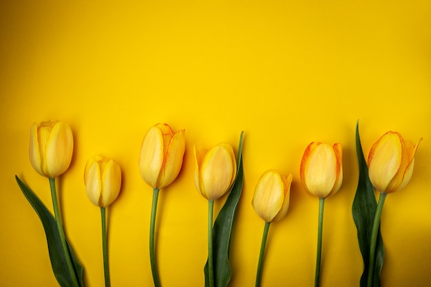 Желтые тюльпаны на желтом фоне.