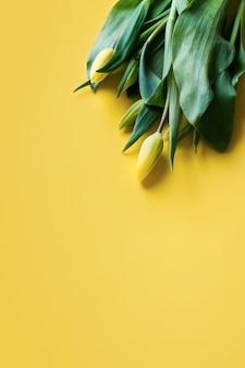 黄色の背景に黄色のチューリップ