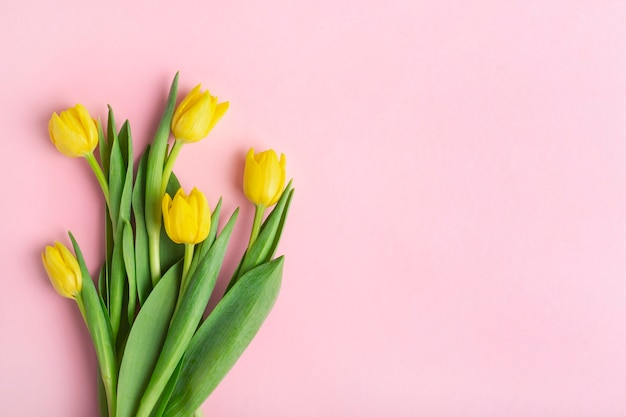 Yellow tulips on a pink background