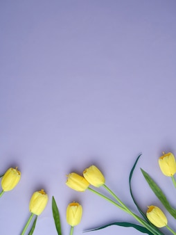 Yellow tulips on the purple background.
