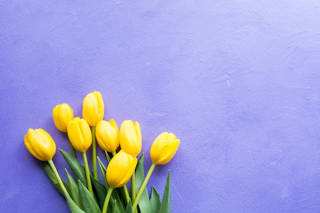 Yellow tulips on purple violet background.