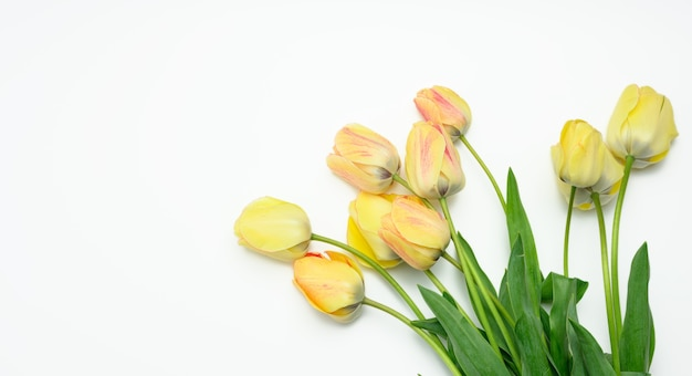 Yellow tulips on white surface, top view, copy space
