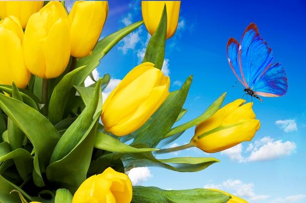 구름과 푸른 하늘에 파란색 나비와 노란 튤립. 여름 엽서입니다. 아름다운 꽃다발. 고품질 사진