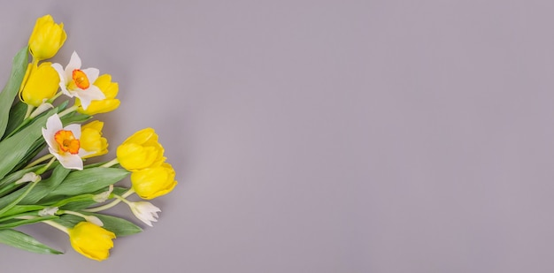Желтые тюльпаны с нарциссами на сером фоне, с копией пространства