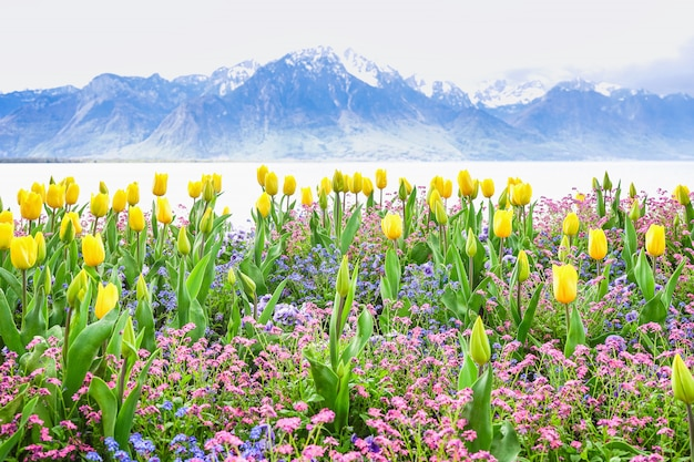 Yellow tulips with lake and mountain