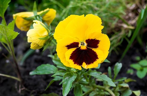 森の中の黄紫。春と夏の花