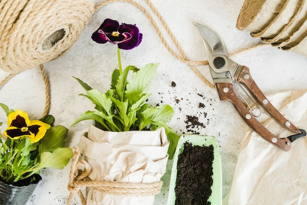 Yellow and violet pansy flower pot with rope; paper bag; secateurs on concrete backdrop