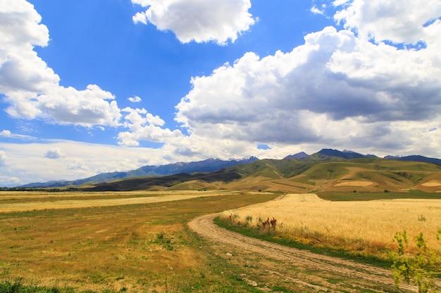 Желтое пшеничное поле на фоне гор и голубого неба