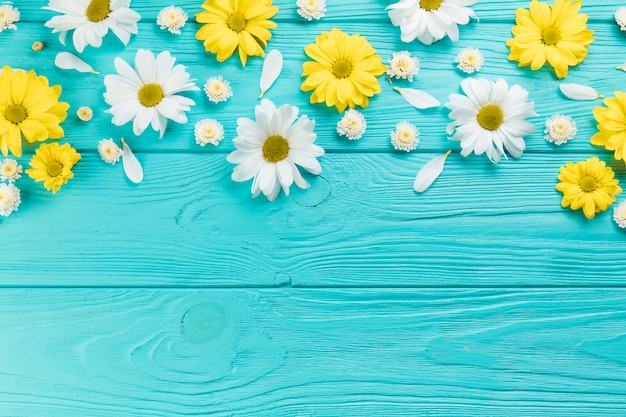 Yellow and white chrysanthemum and chamomile flowers on turquoise wooden surface