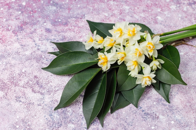 Yellow white daffodil, narcissus, jonquil flower on bright background.march 8 women's day.