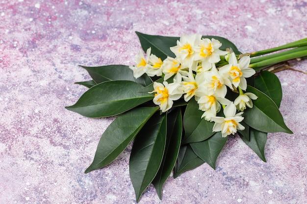 Narciso bianco giallo, narciso, fiore di giunchiglia su fondo luminoso giorno di donne 8 marzo.