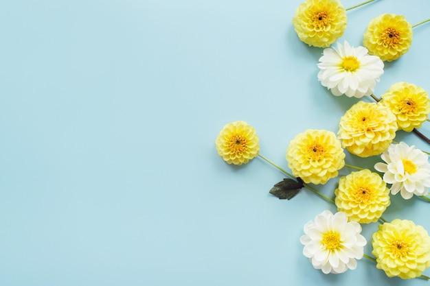 Желтые, белые цветы георгины на синем фоне. композиция цветов. плоская планировка, вид сверху, копия пространства. лето, осень концепция.
