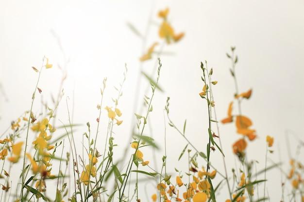 風の下で黄色い野花。ソフトフォーカスとヴィンテージトーン。