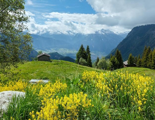 Желтые полевые цветы на летнем горном склоне (альпы, швейцария)