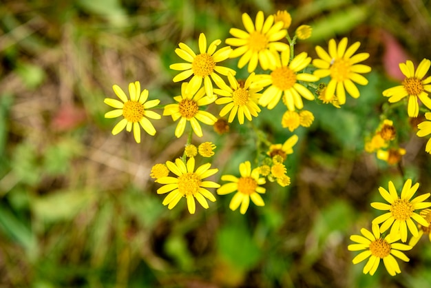 Желтые полевые цветы, растущие в поле.
