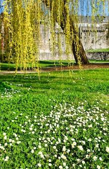 Желтая ива и белые цветы в весеннем парке возле замка франция, фужер