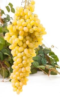 葉と黄色のワイン用ブドウ