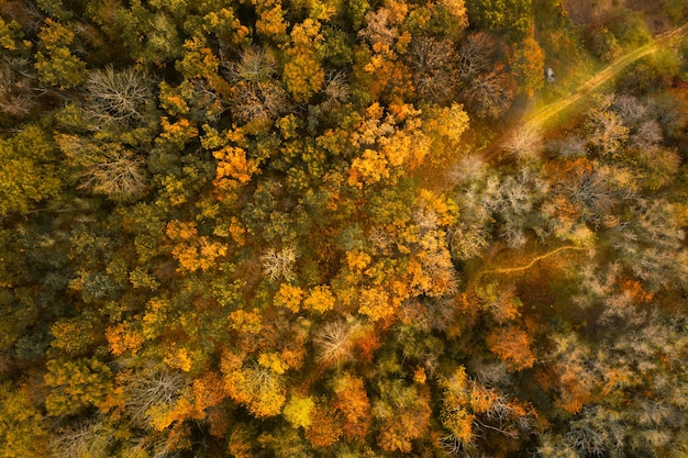 Yellowed autumn forest