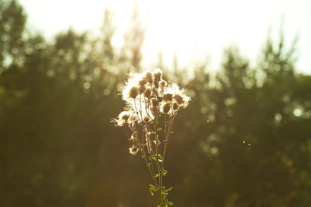Yellowed and dried plants and flowers found in nature in autumn. solce casts glare on a dry flower.