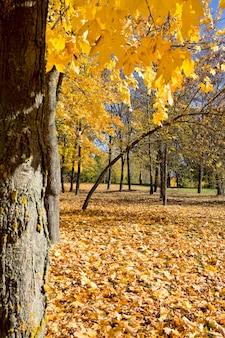 Пожелтевшие деревья