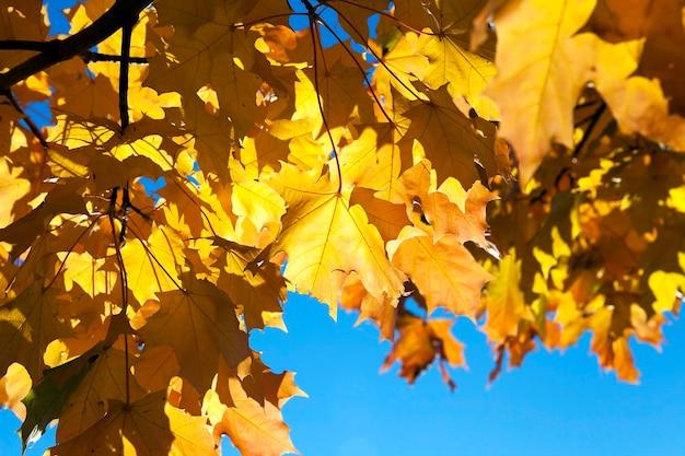 Пожелтевшие листья на деревьях, растущих в городском парке, осенний сезон, малая глубина резкости,