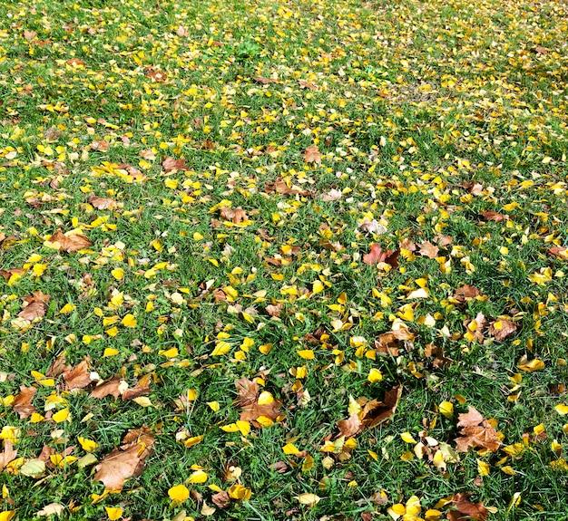 Пожелтение листьев на деревьях пожелтение листьев на деревьях, растущих в городском парке, осенний сезон, малая глубина резкости,