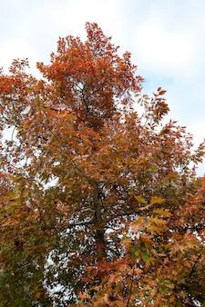 Пожелтевшие листья на деревьях - пожелтение листьев на деревьях, растущих в городском парке, осенний сезон