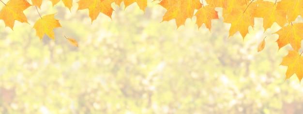 黄橙色のカエデの葉は、ボケとコピースペースバナー形式で秋の自然を背景に