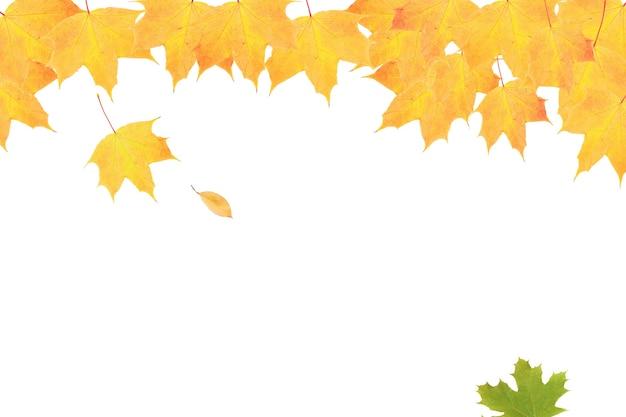 コピースペースで秋の自然を背景に黄橙色のカエデの葉
