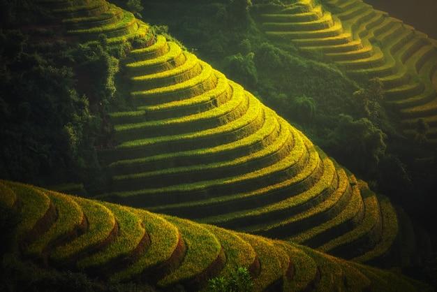 ベトナムのyenbai、mu cang chaiのテラスのライスフィールド。