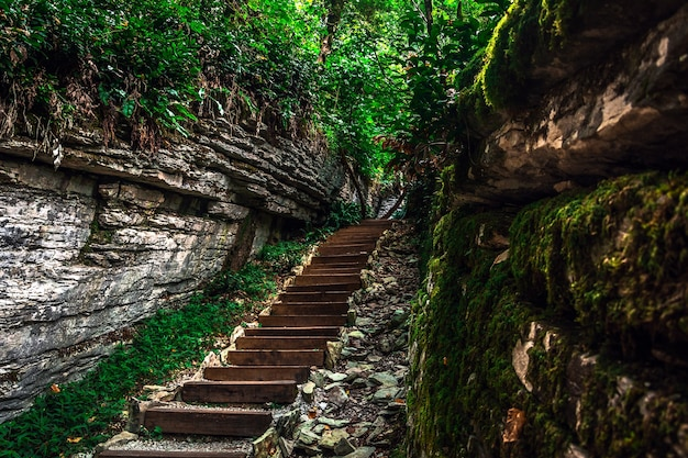 Yew tree and boxwood tree grove with forest path among rocks and moss in summer sochi russia