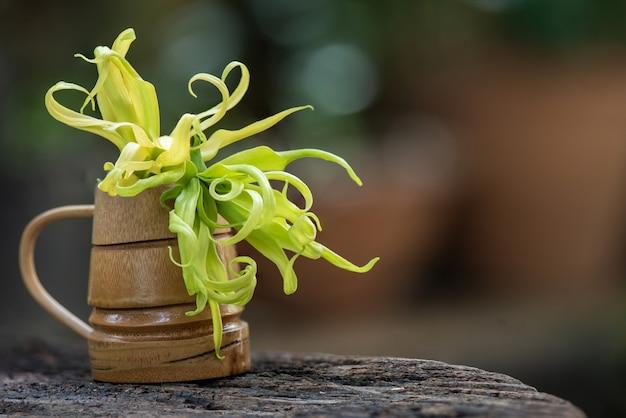 Ylang-ylang or cananga odorata flowers on nature surface. Premium Photo