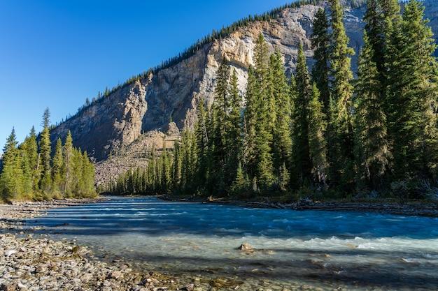 晴れた日の朝、ヨーホー川が緑の松林を流れます。アイスライントレイル、ヨーホー国立公園、カナディアンロッキー、ブリティッシュコロンビア、カナダ。