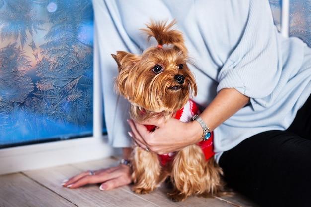 好きなペット - 小型犬の品種yokshirskiy terre