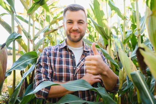 옥수수 밭에서 잘 생긴 농학자 용인이 수확하기 전에 작물을 살펴봅니다. 농업 관련 개념입니다. 옥수수 밭에 서 있는 농업 기술자.